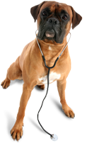 Medicine and Emergency Veterinary Care